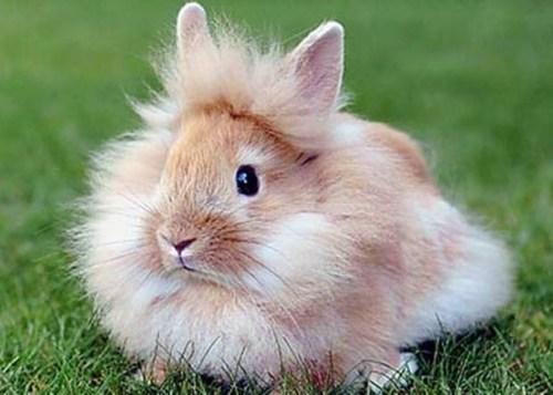 lion-rabbit.jpg