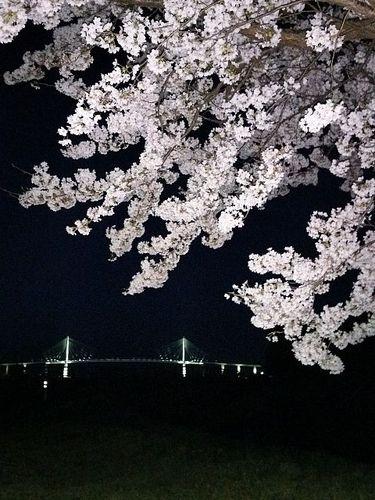 桜よる.jpg